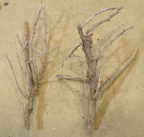 On my recent trip to Colorado I wanted to bring back some Sagebrush armatures with which to make some deciduous trees.  I don't think what we wound up cutting was sage, but it works just as well.  This plant has a very hard woody stem system, and grew close to the ground like sage.  It also has thorns, as you can see.  These two pieces have been rough trimmed, so that I could pack them in my suitcase.